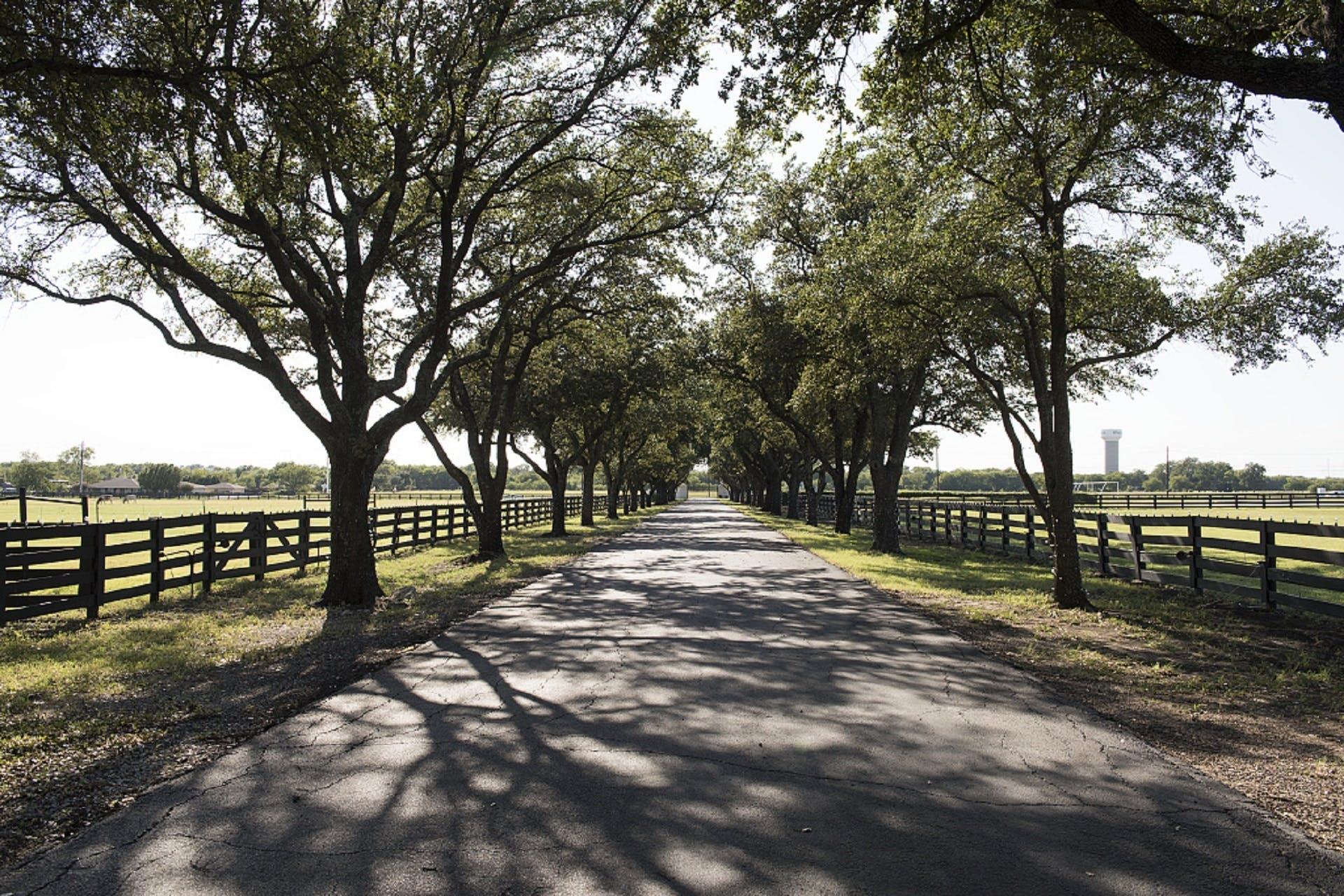 Foto profissional grátis de alcatrão, árvores, asfalto, calçada