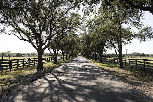 Free stock photo of road, landscape, nature, sunny