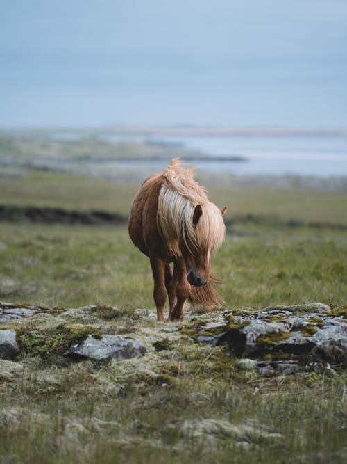 Selective Focus Photo of Brown Horse