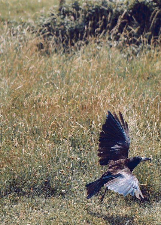 dzika przyroda, ptak, ptasi