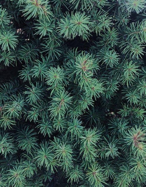 綠葉, 花園 的 免費圖庫相片