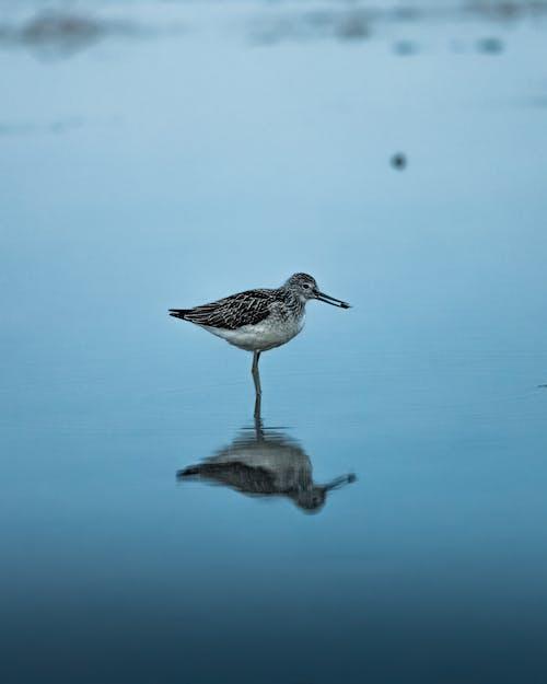 Fotos de stock gratuitas de agua, al aire libre, alas, animal