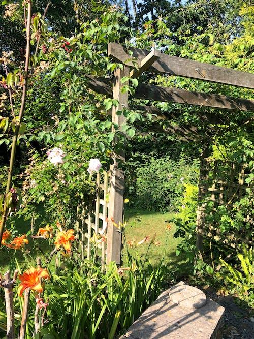 Foto d'estoc gratuïta de flor de jardí