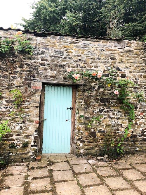 Foto d'estoc gratuïta de fons d'art, fons de pantalla de flors, fons per a la pantalla de bloqueig, jardí