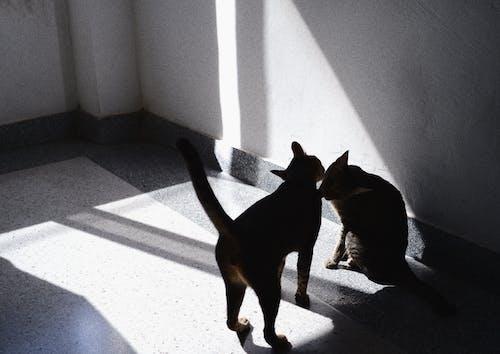 貓 的 免費圖庫相片