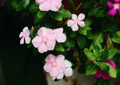 Foto d'estoc gratuïta de flor, flor bonica
