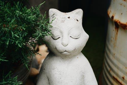 Foto d'estoc gratuïta de cara de gat