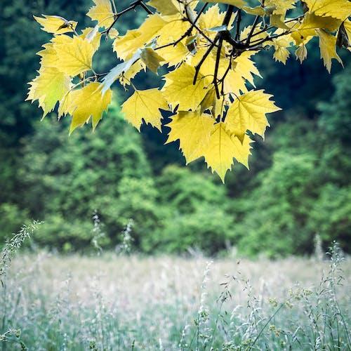 Photos gratuites de arbre, champ, clairière, feuilles