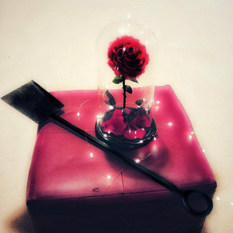#flower #fire #redfire #shovel #smooth #scene #departed, #mobilechallenge, #outdoorchallenge
