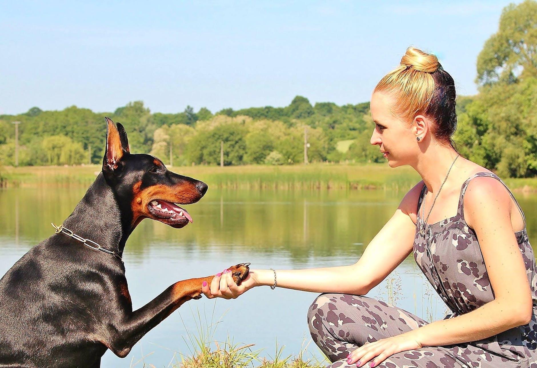 woman training a dog