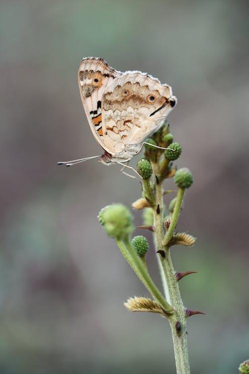 hayvan, kelebek, makro içeren Ücretsiz stok fotoğraf