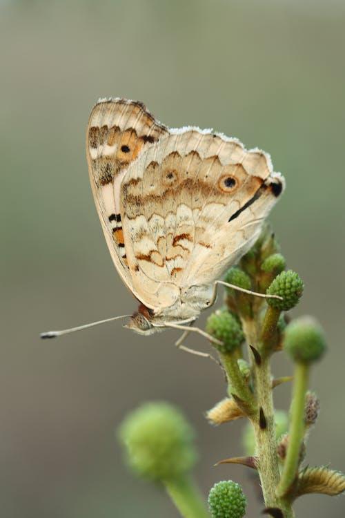 hayvan, kelebek içeren Ücretsiz stok fotoğraf