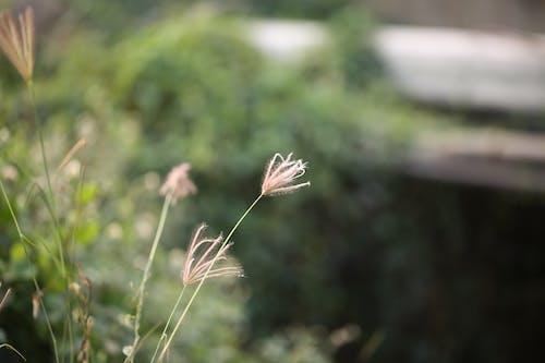 Immagine gratuita di canon, natura, naturale