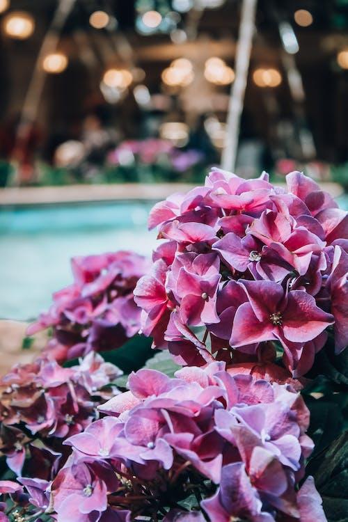 огни, природа, фонтан, цветы의 무료 스톡 사진