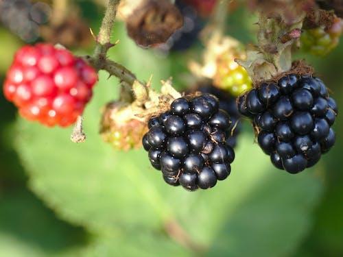 Ảnh lưu trữ miễn phí về nước ép hoa quả