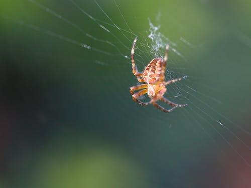 Ảnh lưu trữ miễn phí về một con nhện trong một trang web