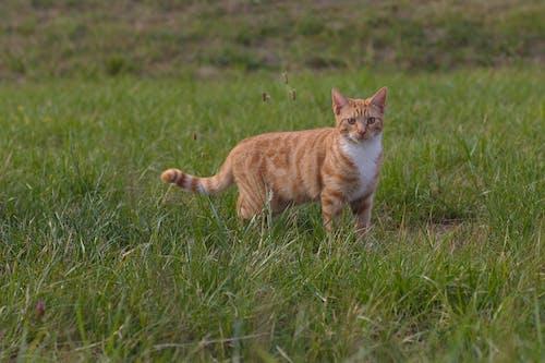 Ảnh lưu trữ miễn phí về một con mèo trong tự nhiên