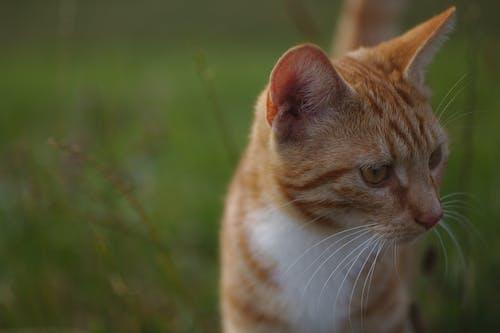 Ảnh lưu trữ miễn phí về mèo đóng lên