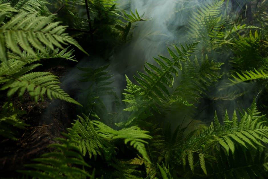 New free stock photo of 4k wallpaper, botanical, environment