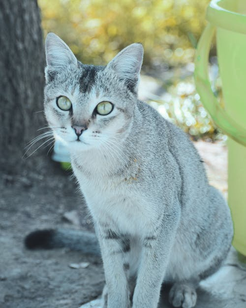 Foto profissional grátis de amante dos animais, cara de gato, fotografia animal, fotografia de animais