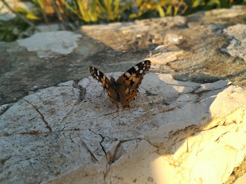 Free stock photo of butterfly, nature
