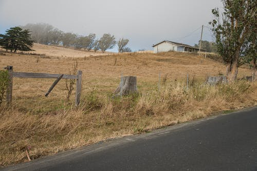 Free stock photo of cow, fallen trees, field
