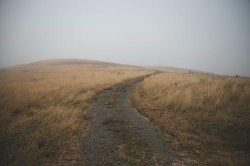 Free stock photo of field, fog, hey