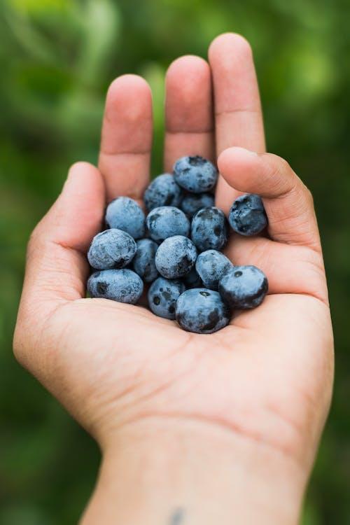 Kostnadsfri bild av bär, blåbär, frukt, hand