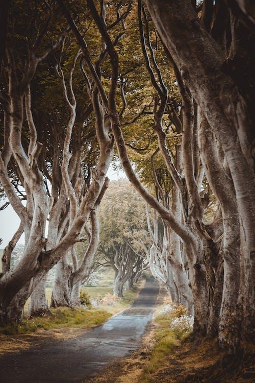 droga, drzewa, wieś