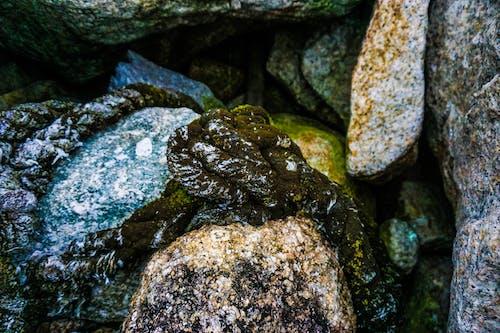 Безкоштовне стокове фото на тему «зелений мох, камінь, мотузка, мох»