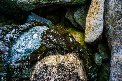 Free stock photo of green moss, moss, nature, rock