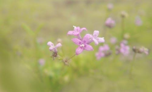 Gratis stockfoto met bloem, paarse bloem