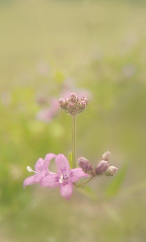 Gratis stockfoto met bloem, paarse bloemen