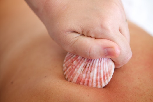 Free stock photo of relaxation, shells, massage