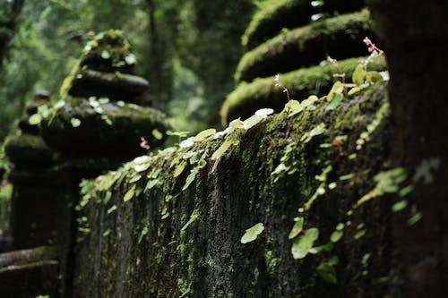 Foto d'estoc gratuïta de fons de naturalesa, Tailàndia, verd