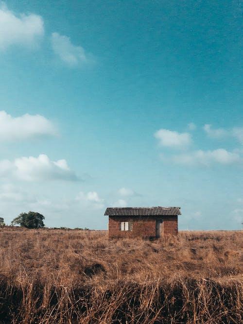 Imagine de stoc gratuită din câmp de iarbă, casa de caramida, fir de iarbă, gazon