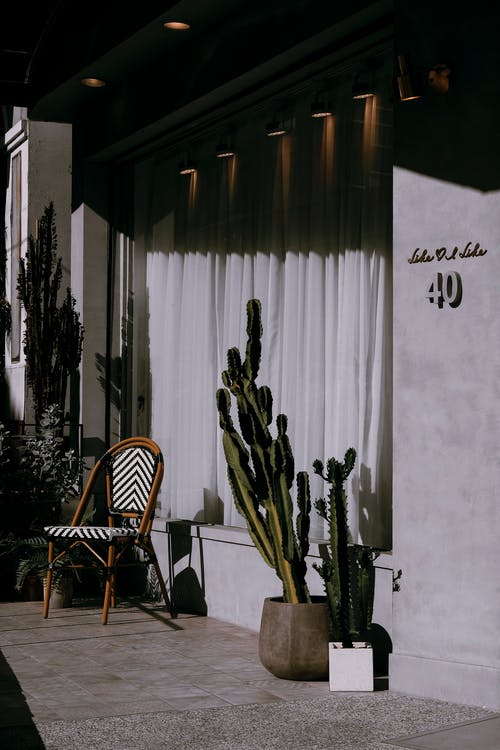 Potted Cacti Near a Wooden Chair