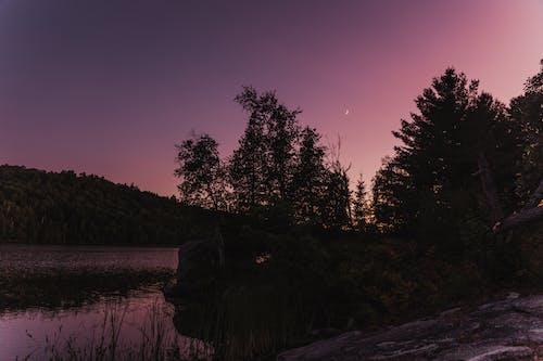 Ingyenes stockfotó fák, folyó, hajnal, háttérvilágítás témában