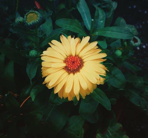 Imagine de stoc gratuită din floare frumoasa, floare galbenă, flori ce înfloresc, galben auriu