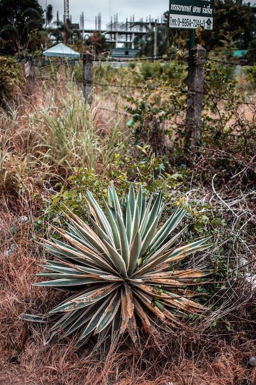 Fotobanka sbezplatnými fotkami na tému ohrada, príroda, rastliny, Thajsko