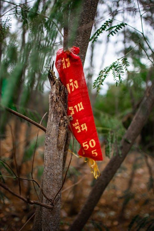 ağaçlar, Asyalı, bokeh, doğa içeren Ücretsiz stok fotoğraf