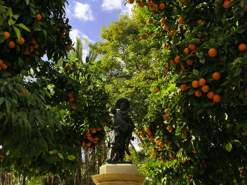 Free stock photo of orange, spain, statue, sunshine