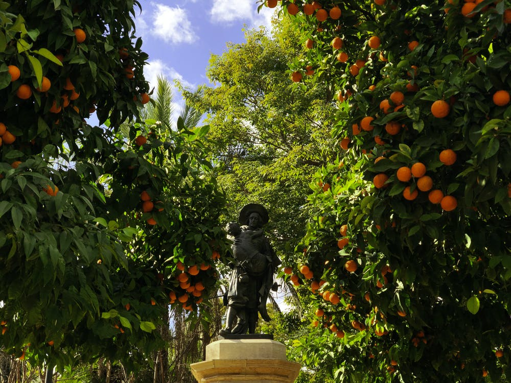 Free stock photo of orange, spain, statue