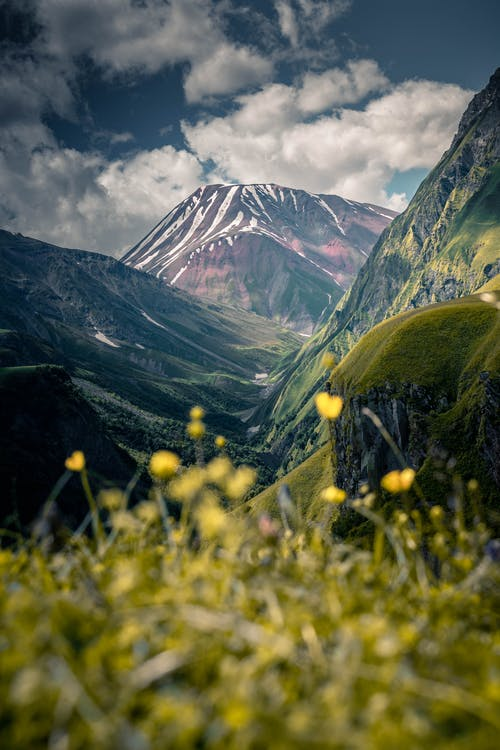 Yellow Flower Field Across Brown Mountain