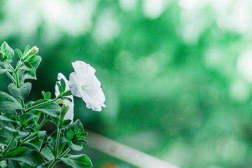 Ilmainen kuvapankkikuva tunnisteilla kasvi, kasvikunta, kasvit, kasvu