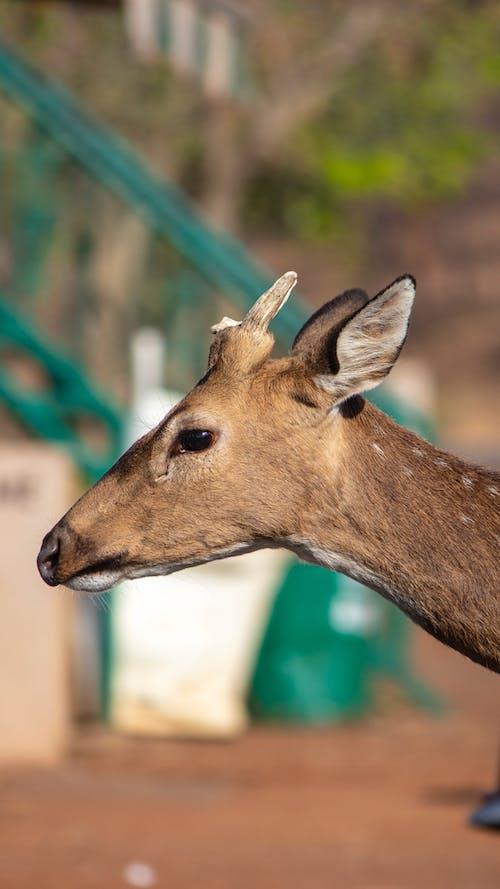 Бесплатное стоковое фото с bhopal, canon, дикие животные, дикое животное