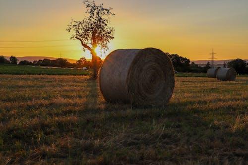 wheatball, 小麥, 小麦面包, 收割机 的 免费素材照片