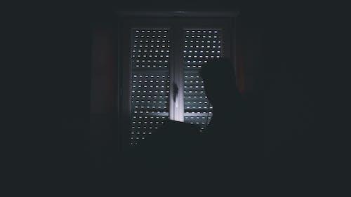 Foto profissional grátis de desconhecido, efeito de luz, escuro, fundo escuro