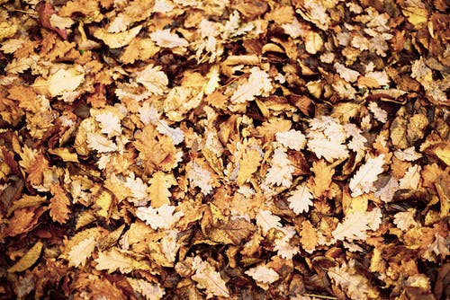 Close-up Photo of Dry Autumn Leaves on Ground