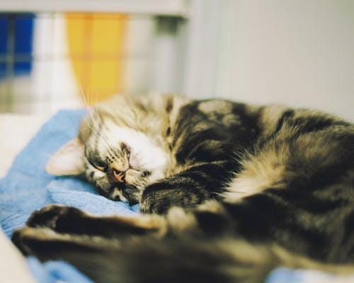 고양이, 고양이를 입양하다, 구조, 동물의 무료 스톡 사진
